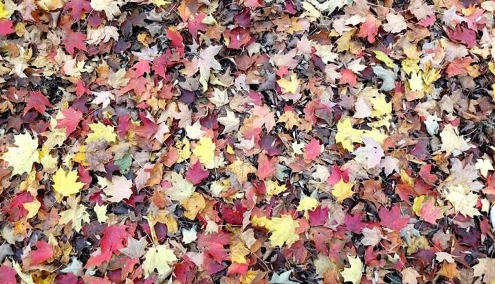 Automne-feuilles-slowandcute