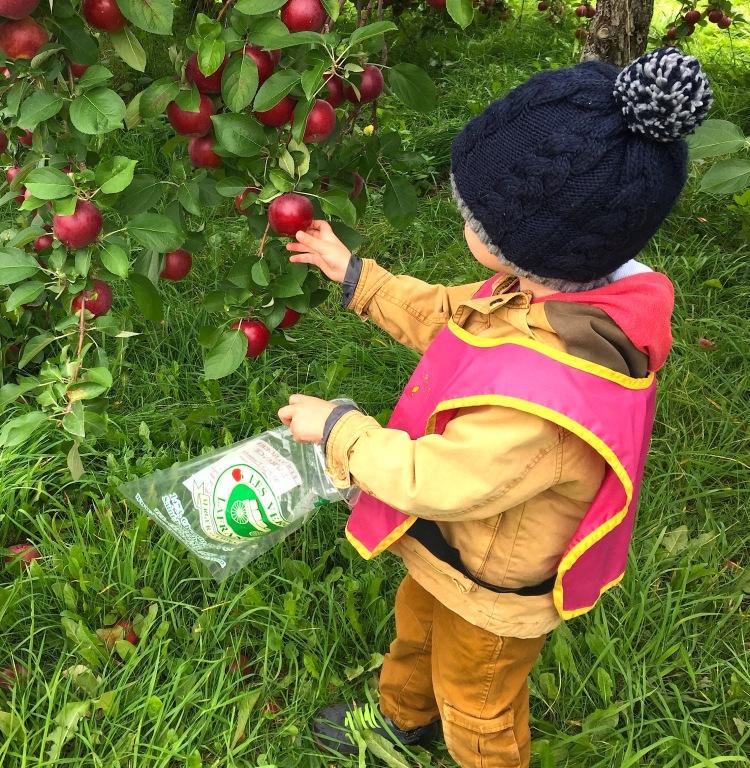 Cueillir des pommes