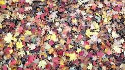 Photo feuilles
