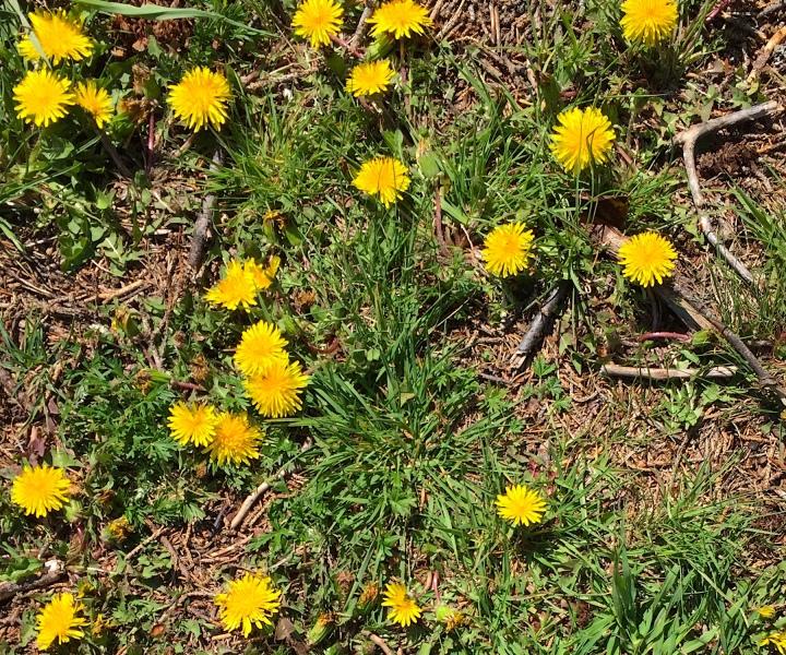 Fleurs-slowandcute